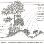 Swales For Water Harvesting
