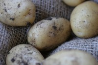 A closer look at some of the medium-sized potatoes