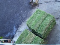 Two pallets (75 m2) of turf arrives.