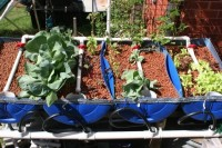 Half-barrel hydroponic grow beds