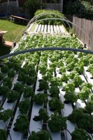 Long hydroponic beds made from roof guttering