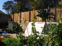 The rear fence and retaining wall, seen from the vegie patch.