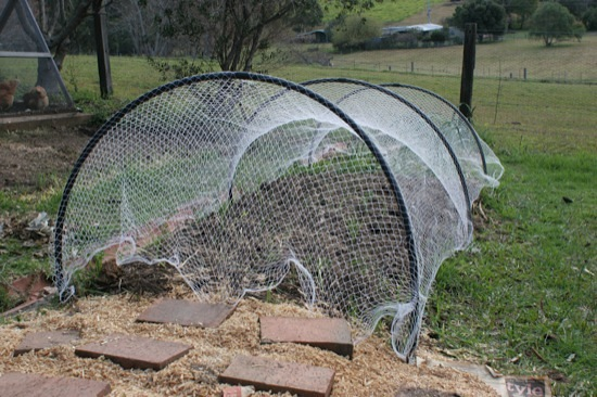 Bird nets on the garden - end view