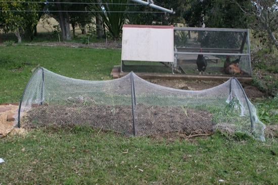 Bird nets on garden beds - side view