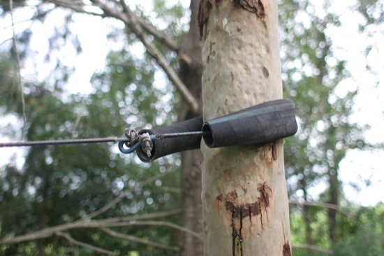 Flying fox cable attached to tree