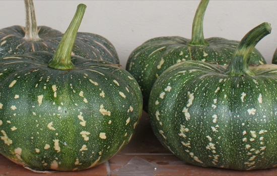 Jap pumpkins ready for storage