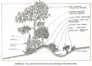 Cross section diagram showing how to plant out swales
