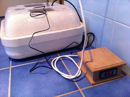 Hovabator incubator with Fridgemate digital temperature controller