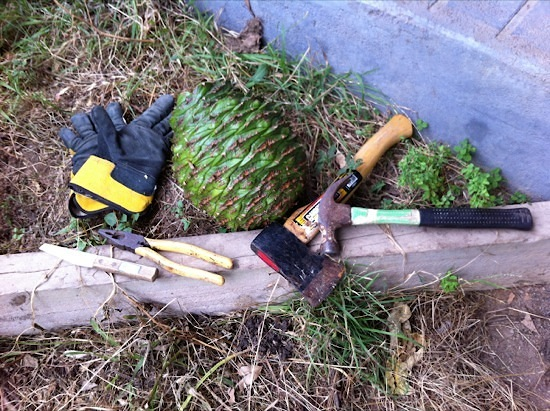 Bunya nut with knife, pliers, gloves, hammer and hatchet