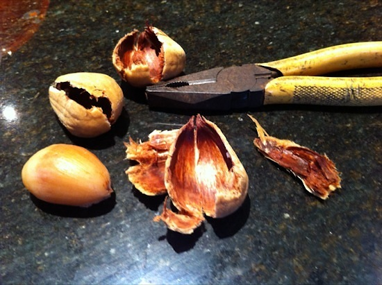 Pliers used to crack bunya nuts from shell