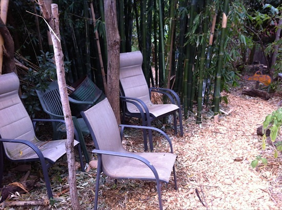 Chairs Under Bamboo