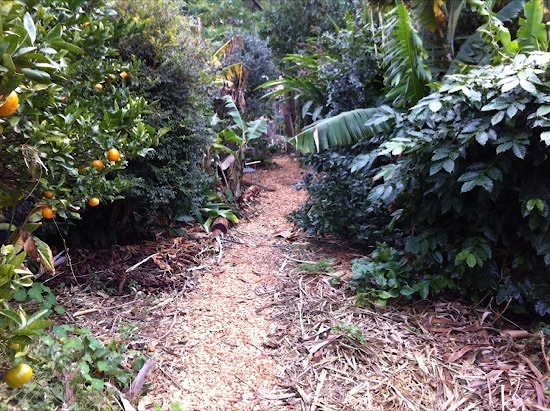 Food Forest Wood Chip Path
